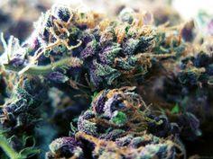 Pretty purple buds