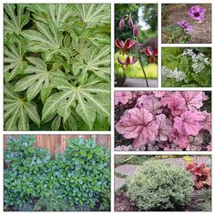 This planting combination has something for every season *and* includes a planting plan to help you recreate it in your garden (follow the link).