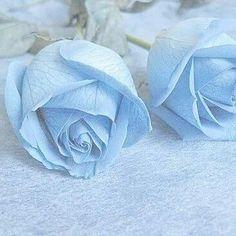 hugh dancy hannibal hannigram will gram hannibal lecter dads blue llight blue aesthetic light blue aesthetic Light Blue Aesthetic, Blue Aesthetic Pastel, Aesthetic Colors, Blue Wallpaper Iphone, Blue Wallpapers, Aesthetic Iphone Wallpaper, Aesthetic Backgrounds, Roses Tumblr, Image Bleu
