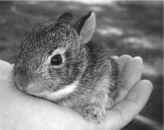 Little Bunny Foofoo!!   #HealthyLivingwithPlexus
