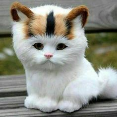 - your daily dose of funny cats - cute kittens - pet memes - pets in clothes - kitty breeds - sweet animal pictures - perfect photos for cat moms Fluffy Kittens, Cute Cats And Kittens, Kittens Cutest, Kittens Meowing, Small Kittens, Fluffy Cat, Pretty Cats, Beautiful Cats, Animals Beautiful