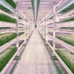 """An Underground WWII Bomb Shelter in London Has Been Converted Into the World's Largest Subterranean Hydroponic Farm """"Over 100 feet below the bustling streets of London is a cavernous, abandoned space. Underground Shelter, London Underground, Underground Homes, Urban Agriculture, Urban Farming, Urban Gardening, Farms In London, Ww2 Bomb, Indoor Farming"""