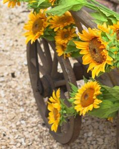 Sunflowers are amazing.. they remind me of you Rob & Bob