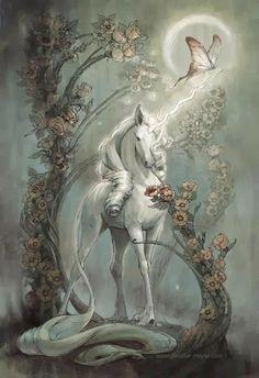 Photos - Google+ #unicorn
