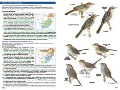 Roberts Birds, Subspecies and Geographic variation in birds Garden Warbler, Natural Science Museum, University Of Cape Town, Bird Guides, Bird Book, Nature Journal, Field Guide, Science And Nature, Journaling