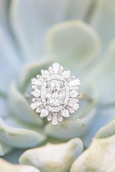 Gorgeous diamond ring succulent bridal details halo ring