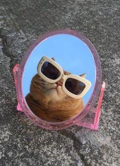 Wallpaper Gatos, Cute Cat Wallpaper, Funny Phone Wallpaper, Mood Wallpaper, Funny Wallpapers, Cute Animal Memes, Cute Funny Animals, Cool Cats, Gatos Cool