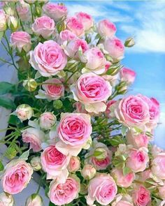 🌹💙🌹Good afternoon🌸💙🌹roses in the sky🌹💙🌹have a nice Tuesday my dear friends💙🌹💙 . Beautiful Flower Quotes, Beautiful Flowers Photos, All Flowers, Flower Photos, Pretty Flowers, Android Wallpaper Flowers, Nature Wallpaper, Flores Diy, Rose Pictures