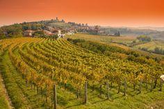 Goriška Brda, the Tuscanny of Slovenia
