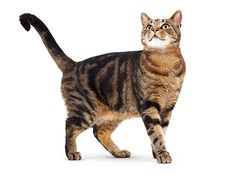 cat-adult-landing-hero.ashx (470×350)