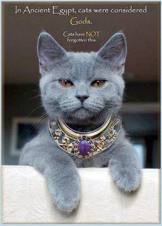 Αποτέλεσμα εικόνας για in ancient times cats were worshipped as gods they have not forgotten this