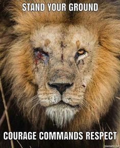 Have a lion attitude attack your goals like your life depends on it rmemes strength fuel fandeluxe Choice Image