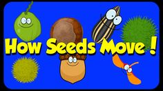 Seed Song - How Seeds Move - Seed Dispersal Science Videos, Science Lessons, Life Science, Plant Lessons, Science Labs, Forensic Science, Physical Science, Earth Science, Kindergarten Science