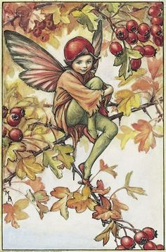 The Song Of The Hawthorn Fairy, an autumn Flower Fairy poem:  For see, my haws are here instead,  And hungry birdies shall be fed  On these when days are cold.