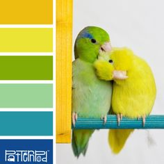 Pretty Parrotlet #patternpod #patternpodcolor #color #colorpalettes Lovely blues, greens, and yellows for your website inspiration. Want a website with no hassles? Visit us: http://fasteasywebsites.com/