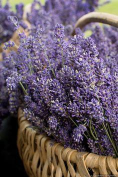 Lavender by Catherina Starzhinska on 500px