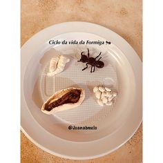 "𝒥𝑜𝒶𝓃𝒶 𝓂𝑒𝓁𝑜's Instagram photo: ""Bom dia!😃 Ciclo da vida da formiga 🐜"" Instagram, Ant, Lady Bug, Good Day, Diy And Crafts"