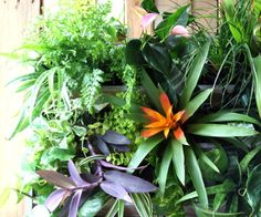 Build a stunning tropical living wall with pallet!   A Piece Of Rainbow