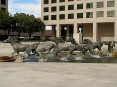 Mustangs of Los Colinas sculptures in Irving, TX