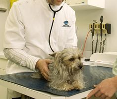 Wellness care can help your pets live a longer, healthier life, says Dr. Plus, there are critical reasons for more frequent checkups for senior pets. Cat Health, Health Tips, How To Stay Healthy, Healthy Life, Office Safety, Wellness Plan, Veterinary Medicine, Feral Cats, Cat Behavior