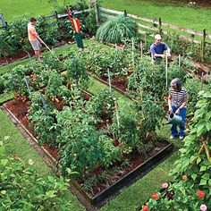 Planting a Vegetable Garden: A Monthly Guide | MyRecipes.com