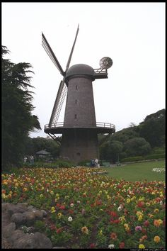 golden-gate-windmill-134.jpg