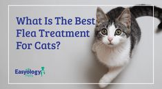 It seems like no matter what you do, the fleas keep coming back. In fact, they can become a serious problem for cats. And even if you don't notice that your cat has fleas right away, you may start to see changes in their skin. Cat Care Tips, Pet Care, Cat Has Fleas, Dog Flea Treatment, Cat Litter Mat, Diy Cat Toys, Mama Cat, Cat Whiskers, Cat Behavior