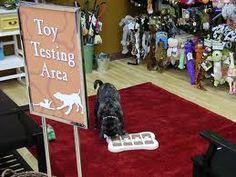 -Repinned Pet store toy testing area. Cute idea.