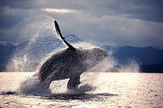 Пейзажи Аляски: Вспоминая японского фотографа Митио Хосино   nippon.com - Информация о Японии