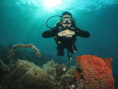 Diving, Motorcycle, Vehicles, Scuba Diving, Motorcycles, Car, Motorbikes, Choppers, Vehicle