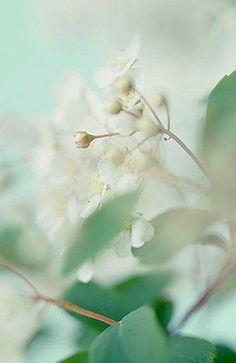 mint.quenalbertini: Sweet, soft flower   Tagli, ritagli e coriandoli