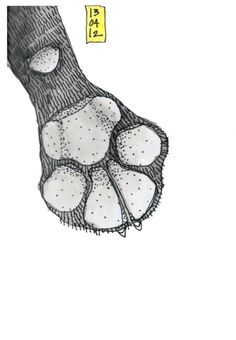 Odie's Paw  Ink and Watercolor on Paper