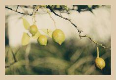 otoño vintage fotografías Adrian M.