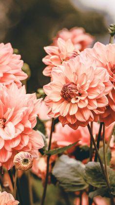 Flower Phone Wallpaper, Iphone Background Wallpaper, Aesthetic Iphone Wallpaper, Aesthetic Wallpapers, Pretty Backgrounds, Pretty Wallpapers, Flower Backgrounds, Beautiful Nature Wallpaper, Flower Aesthetic