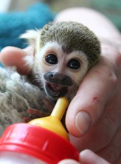 Infant Squirrel Monkey Gets Bottle-Fed at Warsaw Zoo