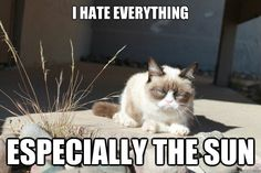 The sun sucks Funny Pictures, Funny Pics, Grumpy Cat, Cat Love, Cool Cats, True Stories, Make Me Smile, Funny Animals, Haha