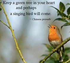 22 ideas for singing bird quotes heart Tree Quotes, Bird Quotes, Nature Quotes, Bird Sayings, Nature Photography Quotes, Peace Quotes, Singing Quotes, Silent Quotes, Song Quotes
