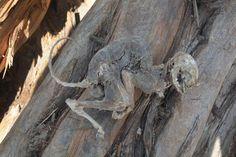 20 Eylül 2017, Çarşamba1Sivas'ın Yıldızeli ilçesine bağlı Kavakderesi köyünde kesilen 500 yıllık ardıç ağacının içinden hayvan fosili çıktı.Şu anda en çok okunan haberler için tıklayın.2İlçeye bağlı …