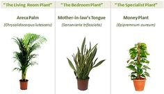 Garden nasa collection 8 Powerful Plants That Detox the Air in Your Home (or dorm room)