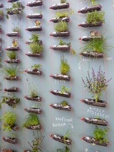 Recycling Water Bottles as Vertical Gardens...  Post from Green Renaissance
