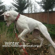 Winter has been adopted! Congrats Winter!