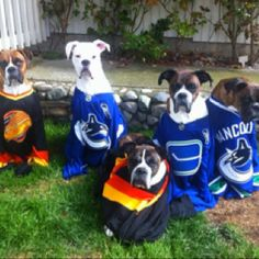 Canadian Boxer Rescue hockey fans - so cute! Boxer And Baby, Boxer Love, Boxer Rescue, Dogs Of The World, Puppy Love, Hockey, Creatures, Puppies, Boxers
