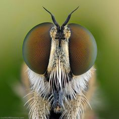 """Ireneusz Irass Waledzik, from Poland, uses macro photography to reveal the fascinating colours and shapes of tiny insects. He said: """"I love macro photography, I spend a lot of time at it. The different shapes of insects' eyes fascinates me. Micro Photography, Types Of Photography, Animal Photography, Insect Eyes, Bees And Wasps, Horse Fly, Fotografia Macro, Beautiful Bugs, Close Up Pictures"""