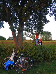 Apple picking in Lund, Sweden.