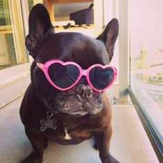 The Daily Frenchie: Photo