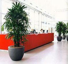 Anthracite ceramic pots Office Plants, Ceramic Pots, Plant Growth, Live Plants, Tropical Plants, Planter Pots, Display, Ceramics, Inspiration