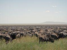 Serengeti National Park, Tanzania, National Parks, Mountains, Nature, Travel, Naturaleza, Viajes, Destinations