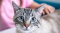Cat have irritated skin? It could be their food. Ask your vet about this Hot Dog Sauce, Alien Photos, Activities For Adults, How To Tie Dye, Thing 1, Knitted Hats, Funny Memes, Funny Quotes, Funny Pictures