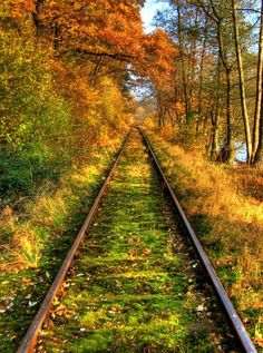 Germany: (this reminds me of the train tracks in the village of Rothenbergen near Gelnhausen, where my grandfather grew … Beautiful World, Beautiful Places, Beautiful Pictures, Abandoned Train, Abandoned Places, Old Trains, All Nature, Jolie Photo, Train Tracks