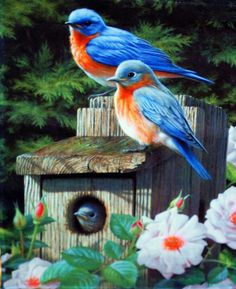 Blue Bird Flag by ~sugartwins ~ Reminds me of the bird house my son built me. And the birds that would come every year, with their babies. All Birds, Cute Birds, Pretty Birds, Little Birds, Beautiful Birds, Beautiful Family, Exotic Birds, Colorful Birds, Backyard Birds